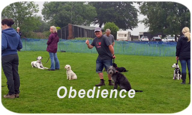 Follow on Outdoor Basics class waiting for instruction! Pet Dog Obedience classes for adolescents and adult dogs.