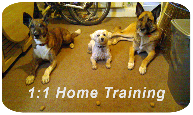 1 to 1 private training help for problem dogs, extra help, or simply can't make class.